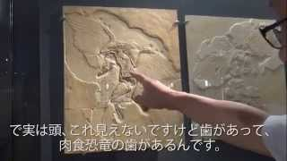 The dinosaurs evolved into birds in FPDM 福井県立恐竜博物館 恐竜は鳥になった