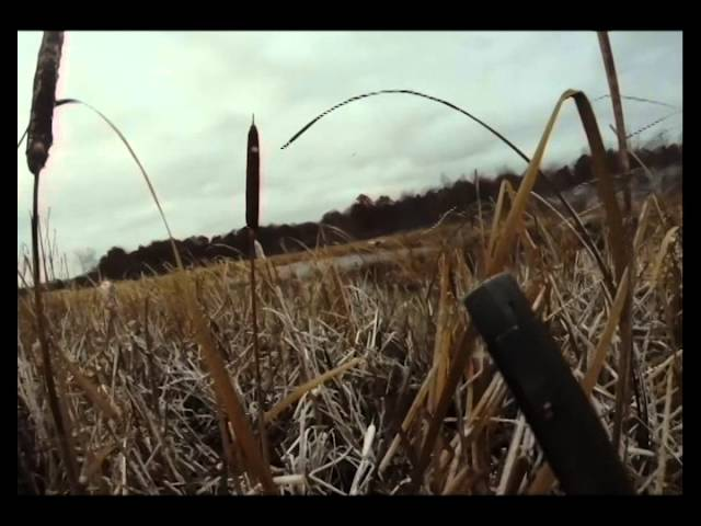 Duck and Goose Hunting 2014