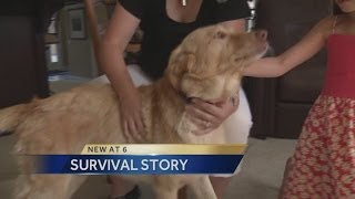 Dog returns home after going missing 2 years ago