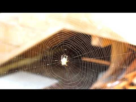 Spider Web Camera Test Video