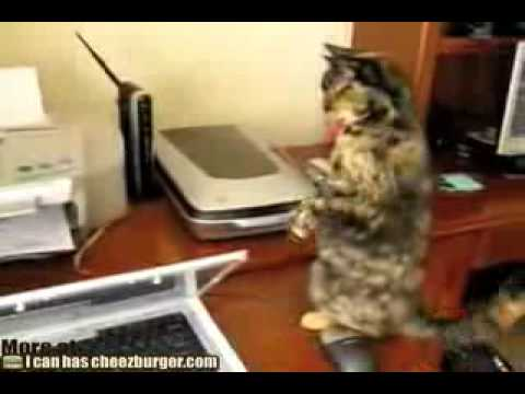 Molly the cat, meet the printer for the 1st time... Video