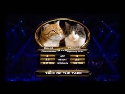 Бои котов (продолжение)