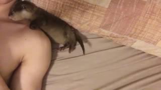 Baby otter 4