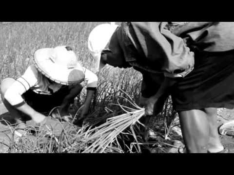 Pagpangabudlay sa BOMBAY (Onion)