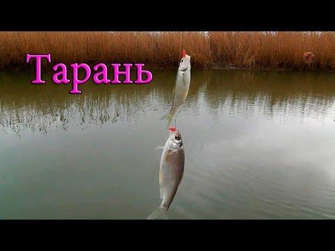 рыбалка в море на поплавочную удочку