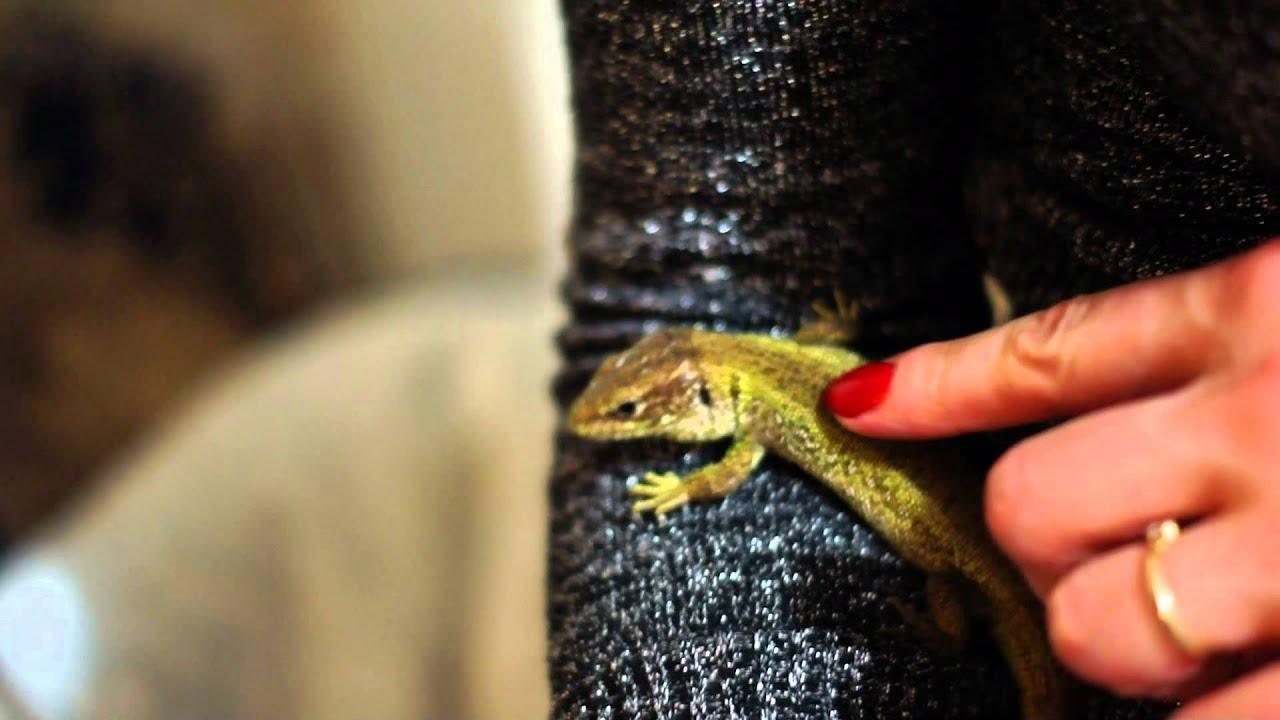 Что едят ящерицы в домашних условиях? В какой пище 90