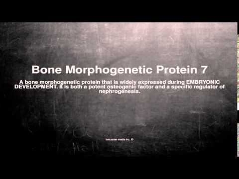 Medical vocabulary: What does Bone Morphogenetic Protein 7 mean