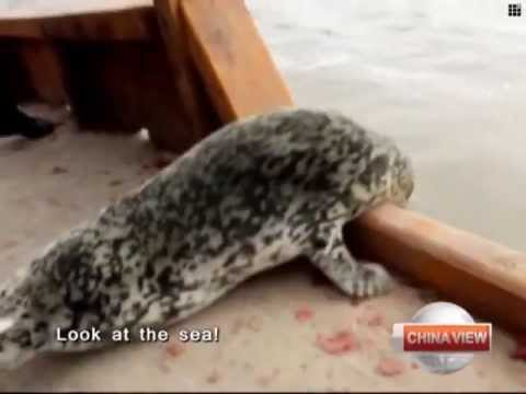 Harbor seals protected in NE China