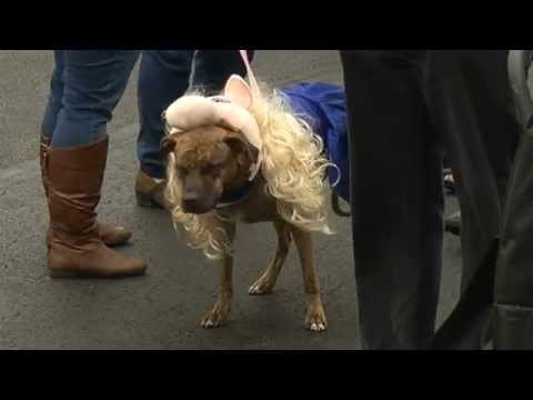 NBC 24 anchor judges doggy costume contest