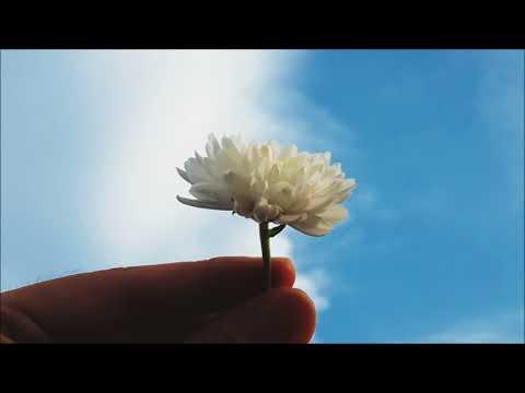 Flora's Secret by Enya (Lyric Video)