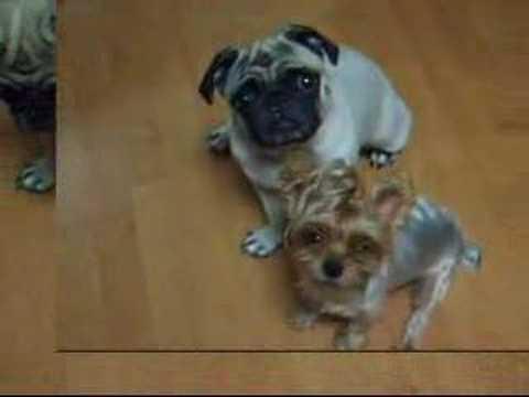 pets grooming