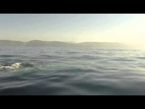 Paddle Boarder's Close Encounter With A Blue Whale! video