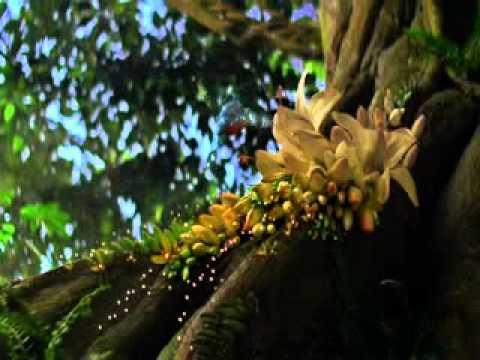 Sex Malayalam 2013 video