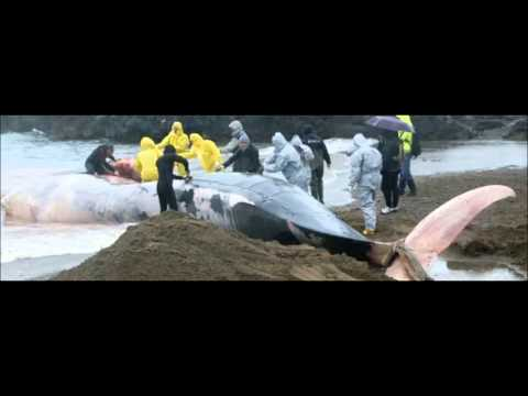 #Italy #OperationGreenRights The Cetacean Sanctuary of Livorno destroyed by pollution