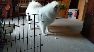 Ballception is Kuma's new favorite toy!