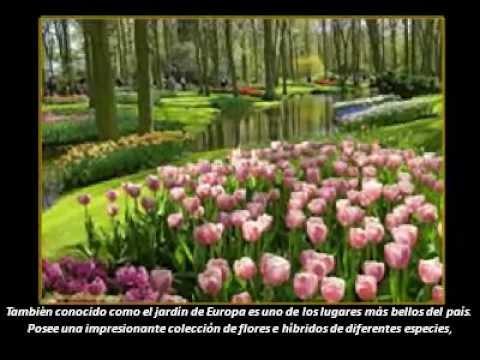 Keukenhof holanda el jardin m s bello del mundo youtube - Jardines de holanda ...