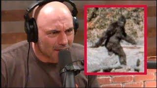 Joe Rogan - I Was Convinced Bigfoot Was Real!