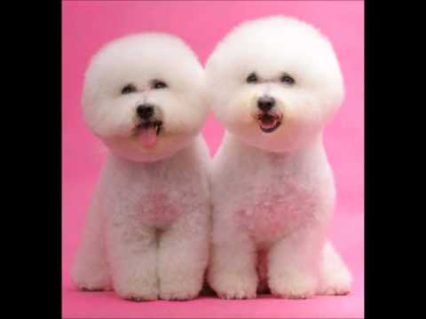 Cutest Dog Breeds in The World Cutest Dogs Breeds in The