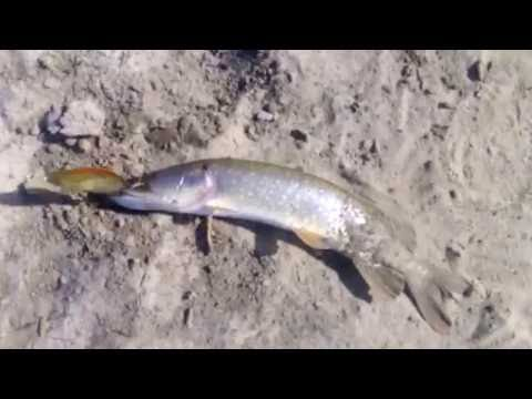 рыбалка в ханты-мансийске декабрь 2016