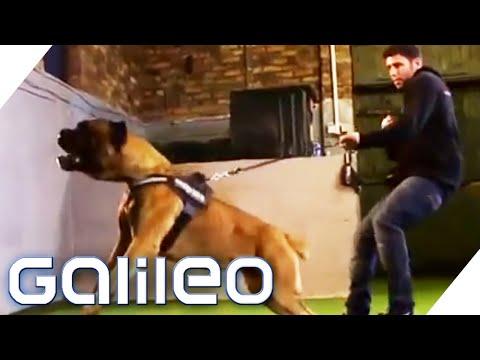 Die besten Wachhunde der Welt | Galileo | ProSieben