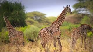 Tanzania Tourism (Unforgettable Tanzania)