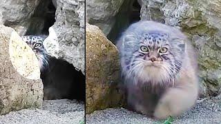 Ozzy Man Reviews: MEGA CAT COMPILATION