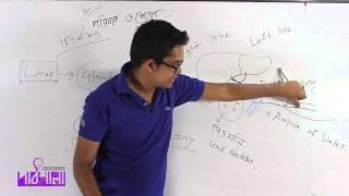 02. Digestive Glands Part 01 | পরিপাক গ্রন্থি পর্ব ০১ | OnnoRokom Pathshala