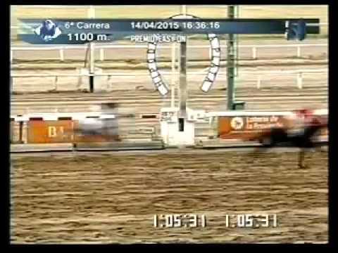 Vidéo de la course PMU PREMIO EASY ON