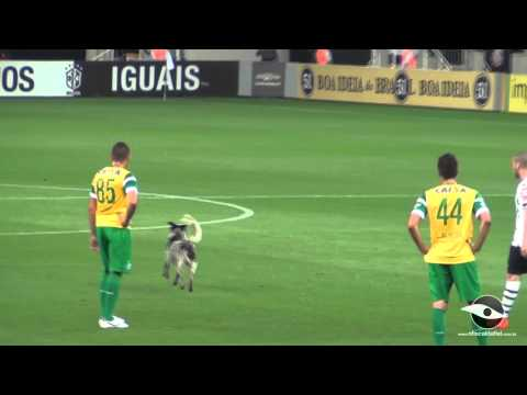 01-11-2014 - Corinthians 2x2 Coritiba - Cachorro no gramado