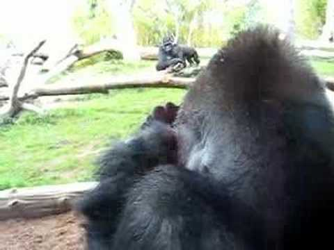 Gorilla Mom hugs Child
