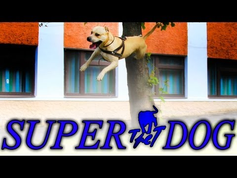 TRET - SUPER DOG