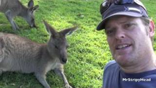 my PET KANGAROOS