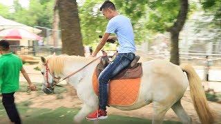 PHD | Thử Cưỡi Ngựa | Ride A Horse