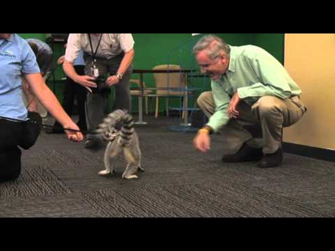 SeaWorld animals visit Times-Union newsroom Video