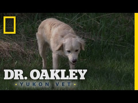 Doggie Digestion Diagnosis | Dr. Oakley, Yukon Vet: Deleted Scene