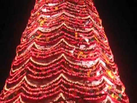 Palawan Giant Christmas Tree