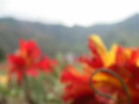 Tulip Garden, Srinagar,India_Manojeet Rautela