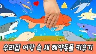 한국어ㅣ우리집 어항 속 새 해양동물 키우기! 어린이 동물 만화, 동물이름 외우기ㅣ꼬꼬스토이