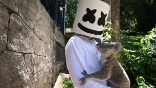 Marshmello gets attacked by a Koala in Australia