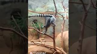 Funny animal _- you can't stop your laugh