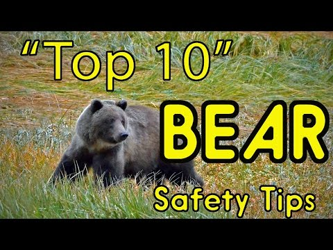 Top 10 BEAR Safety Tips (or HOW TO AVOID BEING EATEN ALIVE!)