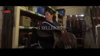 Une visite des Ecuries de Bechereau, Pension Chevaux proche Montargis, Ecurie de Propriétaires