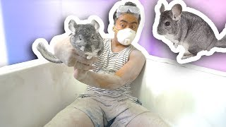 CHINCHILLA DUST BATH CHALLENGE!