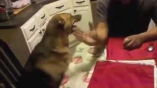[Carl David Ceder Hello TGIF] Video
