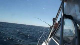 YellowFin Tuna Fishing in the Gulf