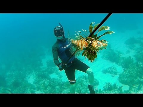 Spearfishing Poisonous Lionfish - Bahamas Part 1 (Ted's HoldOver)