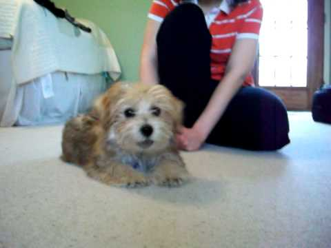 Tips for housebreaking a puppy in winter