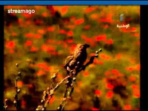 إبتهالات وأناشيد دينيّة بصوت منير المهدي thumbnail