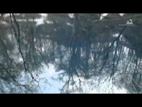 早春の青池(十二湖) - 水面(カメラ移動) - 0293A