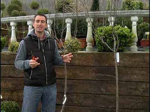 C mo podar un rbol youtube for Como se desarrolla un arbol